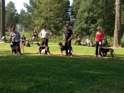 BIR hundar lördag rättvik 2014